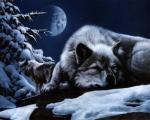 SleepingWolf's Photo